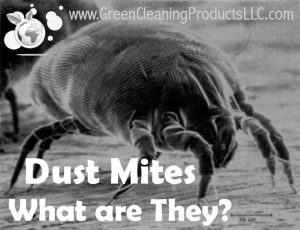 Dust Mites - What Are They from Green Cleaning Products