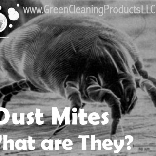 Dust Mites | What They Are and Why Green Cleaning is Vital