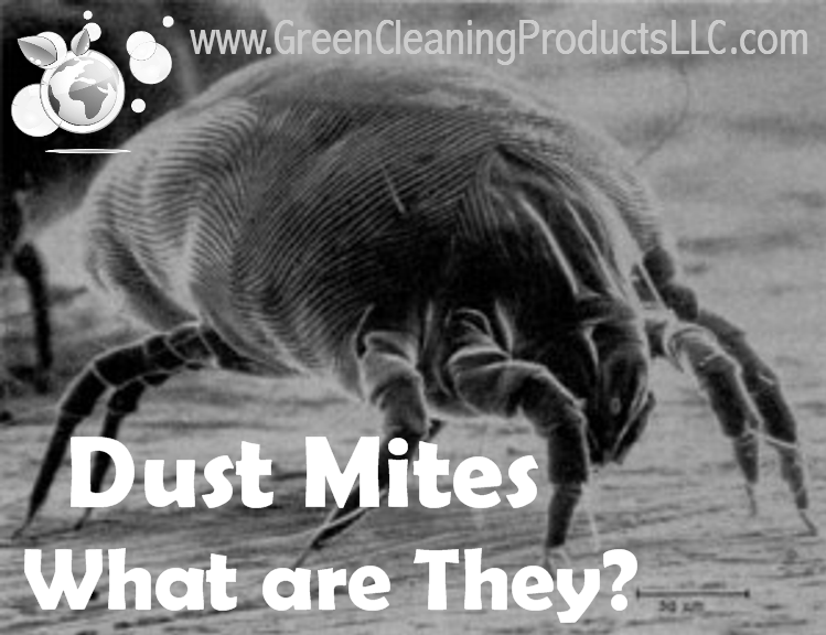 how to clean house of ear mites
