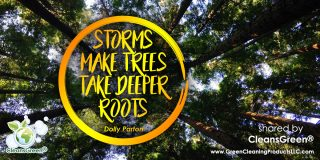 Storms Make Trees Take Deeper Roots - Dolly Parton #Quotes